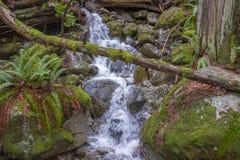 Water die over rotsen in een bergstroom meeslepen royalty-vrije stock fotografie