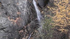 Water die over rotsen, waterval en de herfstkleuren in de bergen, de gele en rode bomen draperen stock video