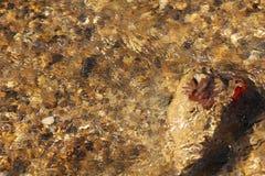 Water die stroomopwaarts over Bruin Blad stromen Stock Foto