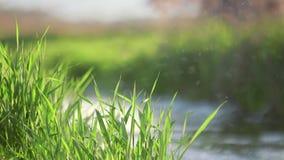 Water die zich op lakeshore tijdens zonnige dag bewegen stock videobeelden