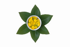 Water dipper with flowers of golden shower,Songkran festival. Water in water dipper with fresh flowers of golden shower on green leafs for Songkran festival Royalty Free Stock Image