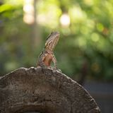 Water Dragon. Stock Photography
