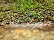 Water dripping from mossy wall to clear stream Royalty Free Stock Photos
