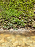 Water dripping from mossy wall to clear stream Stock Photo