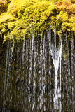 Water dripping out of moss in black forest, Germany Royalty Free Stock Photos