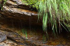 Water dripping from rock. Closeup of water dripping from rock face with overhanging grass Stock Photo