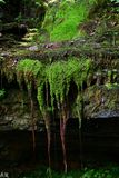 Water dripping through rock and exposed tree roots royalty free stock photos