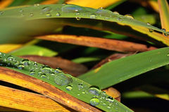 Water drop. On a blade of grass in macro Royalty Free Stock Photography