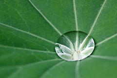Water drop. Drop of water on large leaf, nature background Stock Photo