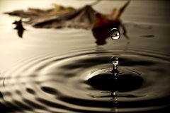 Water drop. Royalty Free Stock Photography