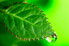 Water  Drop. Water drop on the fresh green leaf. Super Macro Royalty Free Stock Image