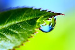 Water  Drop. Water drop on the fresh green leaf. Super Macro Stock Photography