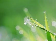 Water Drop Stock Image