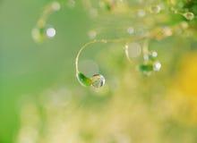 Water Drop royalty free stock photos