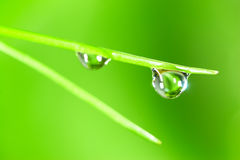 Water drop. On the fresh green shoot. Super Macro Royalty Free Stock Image