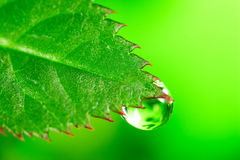 Water drop. On the fresh green leaf. Super Macro Stock Image