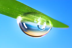 Water  Drop. Water drops on the fresh green shoot. Super Macro Royalty Free Stock Photography