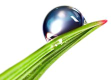 Water drop. On the fresh green shoot. Isolated over white background Stock Photos
