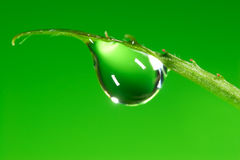 Water  Drop. Water drop on the fresh green shoot. Super Macro Stock Image