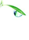 Water drop. On the fresh green shoot. Super Macro Stock Image