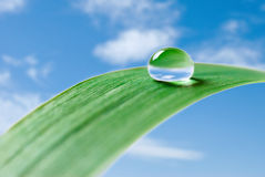 Free Water Drop Royalty Free Stock Images - 9892529