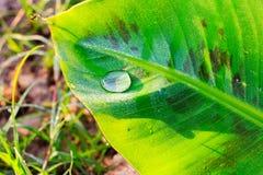 Water drop on banana leaf Stock Photos