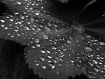 Water, Drop, Black And White, Black Royalty Free Stock Image