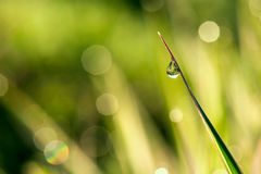 Water drop on a blade of grass and reflection in it. Selective focus, copy space Stock Photo