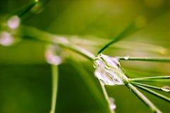 Water drop close up. Macro photography of a big water drop Royalty Free Stock Image