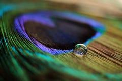 Water_Drop_Closeup_On_Peacock_Feather Royaltyfria Bilder