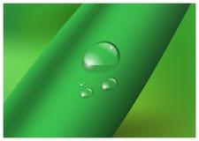 Water drop, droplets on leaf vector illustration.  stock illustration