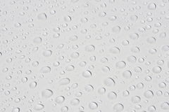 Water drop. Lets on a white background in the sun Stock Image