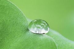 Water drop on fresh green leaf. Of water plant Stock Image