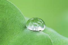 Water drop on fresh green leaf Stock Image