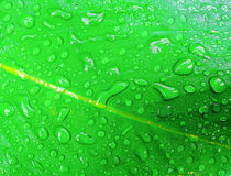 Water drop on fresh green leaf. At nature Royalty Free Stock Photo