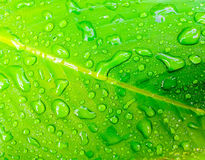 Water drop on fresh green leaf. At nature Stock Photos