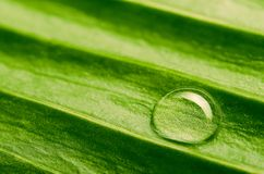Water drop on fresh leaf Royalty Free Stock Photography