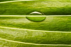 Water drop on fresh leaf Royalty Free Stock Photos