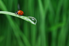 Water drop on the grass Stock Image