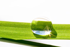 Water drop on the grass blade Royalty Free Stock Photo