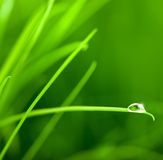 Water Drop on Grass Blade with Sparkle Royalty Free Stock Photo