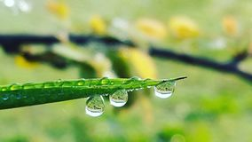 Water drop on grass Stock Image