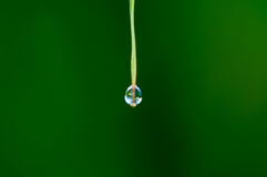 Water drop on grass Royalty Free Stock Photo