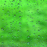 Water drop on green Stock Images