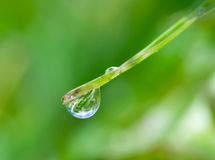 Water-drop on green blade Stock Photos