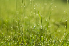 Water drop on green grass Royalty Free Stock Image
