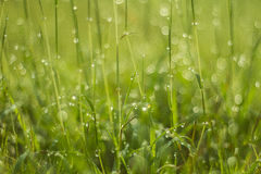 Water drop on green grass Stock Image