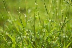 Water drop on green grass Stock Photos