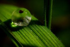 Water drop on a green grass leaf Stock Photos