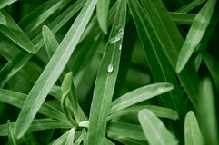Water drop on green grass. stock image